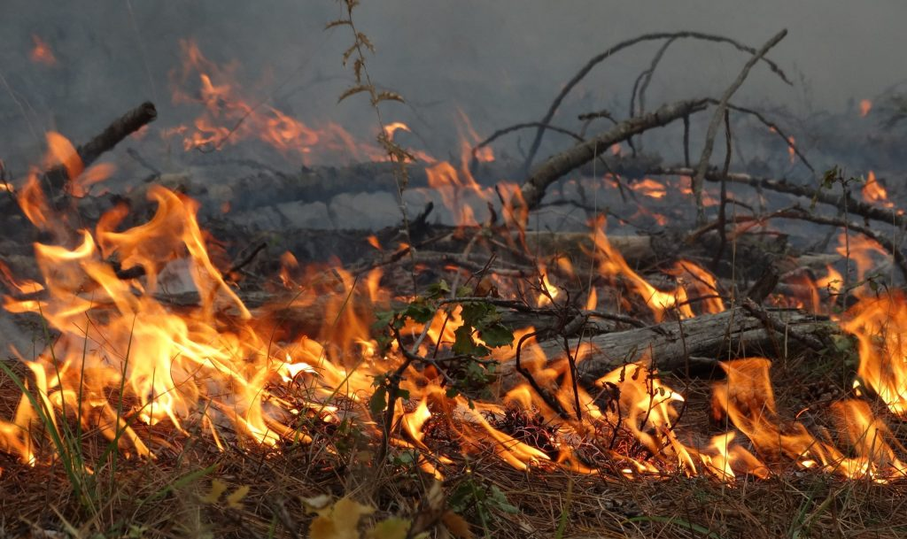 Imagen de fuego durante una quema