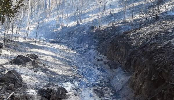Resultado de un incendio en la provincia de Ourense