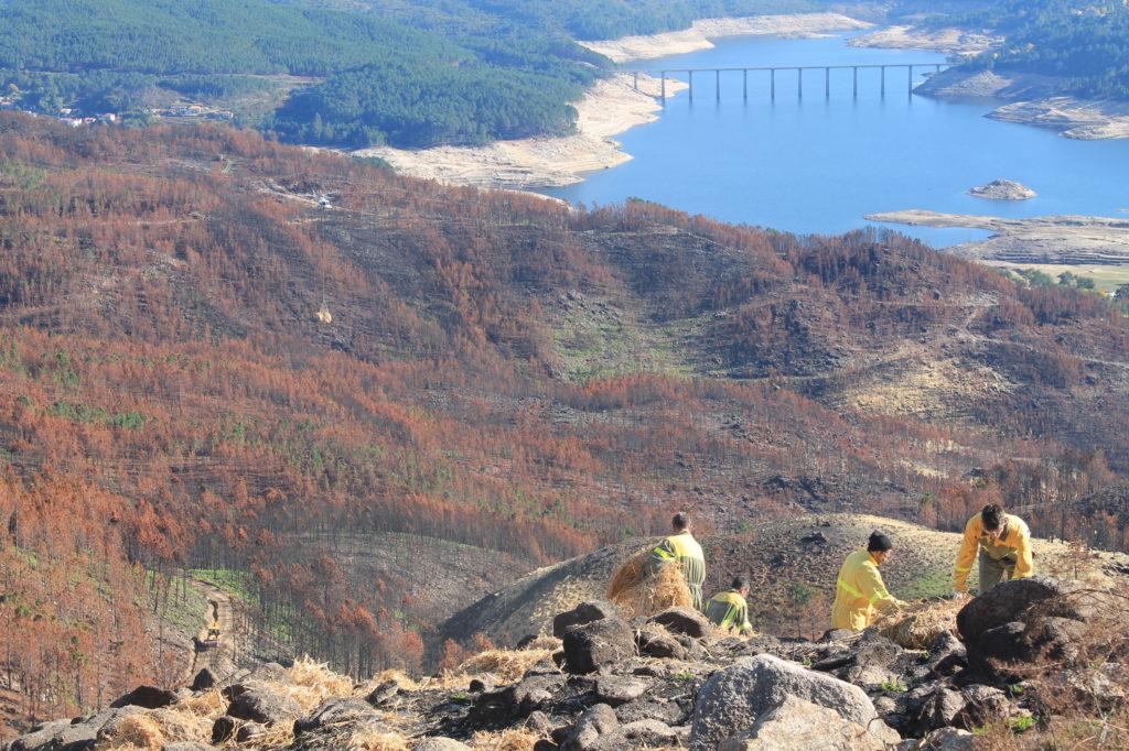 Grupo de trabajo en un monte quemado